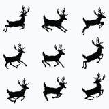 Un ensemble de silhouettes des cerfs communs courants Images libres de droits