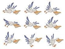 Un ensemble de story-board de pélicans Image libre de droits