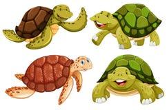 Un ensemble de tortue de mer illustration de vecteur