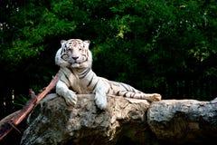 Un ensemble des photos du zoo photographie stock