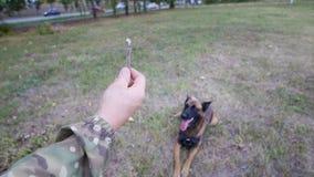 Un entraîneur tenant un bâton et prépare pour le jeter à un chien de berger allemand qualifié image stock