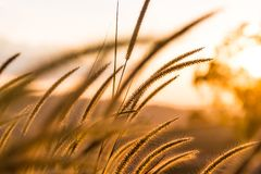 Un'erba nella stagione estiva fotografie stock