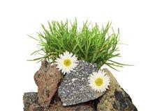 Un'erba sulle pietre su una priorità bassa bianca Fotografie Stock