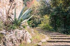 Un escalier de fond et de pierre de forêt photos stock
