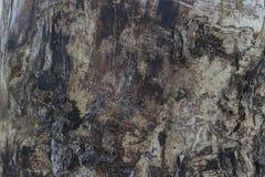 Un escarabajo de corteza dañado textura de madera Fotos de archivo