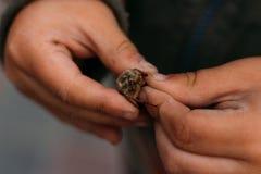 Un escarabajo en las manos de un niño El niño se sostiene en las manos sucias de un escarabajo de mayo, una cola de caballo Niño  imagenes de archivo
