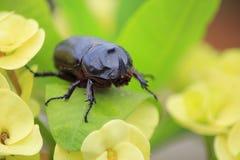 Un escarabajo negro Imagen de archivo