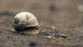 Un escargot Photo stock