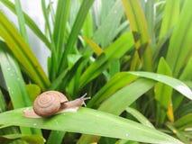 Un escargot Photos stock