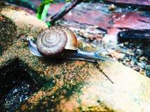 Un escargot Image stock