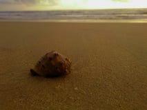 Un escargot Image libre de droits