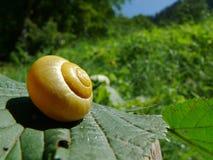 Un escargot avec son escargot image stock