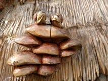Un escargot a découpé dans un arbre Le point de repère national Photo libre de droits