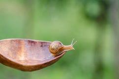 Un escargot sous la pluie, escargot dans le jardin sur la vieille cuillère en bois Images stock
