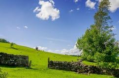 Un espace dans un mur de pierres sèches avec un arbre balayé par le vent Photo stock
