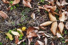 Un espoir à la vie pour un pissenlit à commencer de l'hiver photographie stock