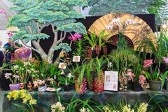 Un'esposizione delle orchidee indigene in Asia immagini stock libere da diritti