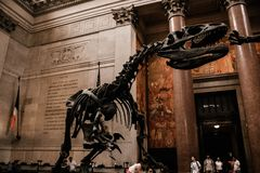 Un esqueleto decorativo de un dinosaurio imagenes de archivo