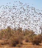 Un essaim des oiseaux Images stock