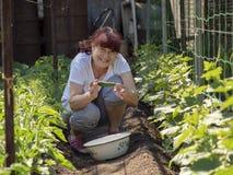 Un europeo mayor de la mujer con un pepino en el jard?n fotos de archivo libres de regalías