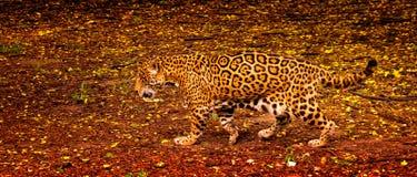 Un excellent camouflage Image libre de droits