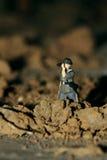 Un explorador Foto de archivo libre de regalías