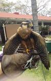 Un falco in mia mano fotografia stock libera da diritti