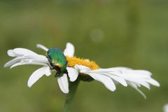 Un fallo de funcionamiento en una flor foto de archivo