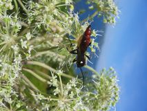 Un insecto en una planta Imagen de archivo