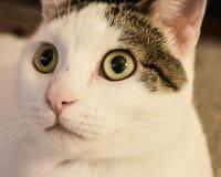 Un felino curioso fotografía de archivo