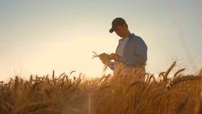 Un fermier qui travaille avec une tablette dans un champ de blé, au soleil couchant. l' homme d' affaires étudie le revenu en ag banque de vidéos