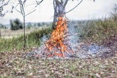 Un feu brillamment de flambage dans une forêt d'automne Photo stock