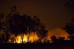 un feu de brousse, forêt est vraiment lumineux en raison du feu, parc national de litchfield, australie photographie stock