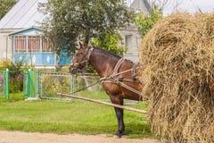 Un fieno del trasporto del cavallo sul carrello di legno - Ucraina. Immagini Stock