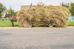 Un fieno marrone del trasporto del cavallo sul carrello di legno - Ucraina. Fotografie Stock
