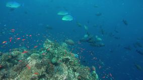 Un filón hermoso con muchos diversos pescados almacen de video