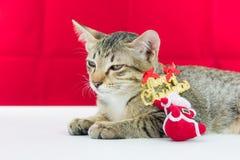 Un fil le père noël de grippage de chat pour Noël Photo libre de droits