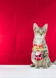 Un fil le père noël de grippage de chat pour Noël Images libres de droits