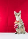 Un fil le père noël de grippage de chat pour Noël Photos libres de droits