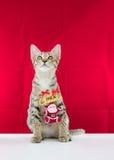 Un fil le père noël de grippage de chat pour Noël Photos stock