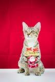 Un fil le père noël de grippage de chat pour Noël Photographie stock libre de droits
