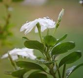 Un fiore Fotografia Stock Libera da Diritti