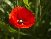 Un fiore Fotografia Stock