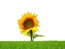 Un fiore fotografie stock libere da diritti