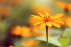 Un fiore d'annata giallo Immagini Stock Libere da Diritti