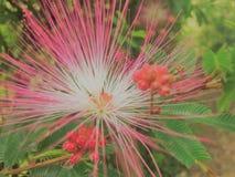 Un fiore del campo di colore rosa intenso che chiama l'attenzione dalla pendenza dei colori e della luminosità fotografia stock libera da diritti