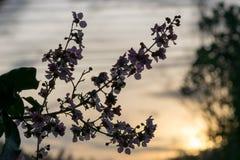Un fiore del giorno nuovo, Fotografia Stock