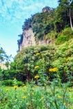 Un fiore del tagete nel prato con il backgroun mountian della roccia Immagine Stock Libera da Diritti
