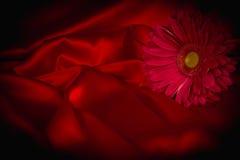 Un fiore della gerbera su un fondo da tessuto Fotografie Stock Libere da Diritti