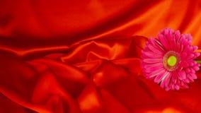 Un fiore della gerbera su un fondo da tessuto Fotografia Stock